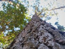 Sikt av överkanten av träden arkivbild