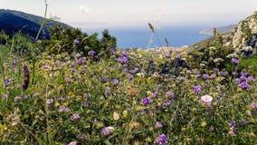 Sikt av Adriatiskt havet Arkivbilder