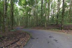 Sikt av asfaltvägen i härlig skog Arkivfoto