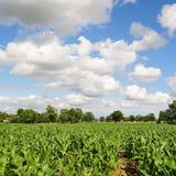 Sikt av att växa för skördar på jordbruksmark Arkivfoton