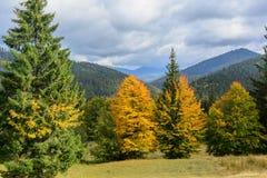 Sikt av berg och höstskogen nära Synevyr sjön Royaltyfri Bild