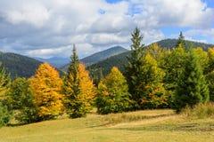 Sikt av berg och höstskogen nära Synevyr sjön Royaltyfri Fotografi