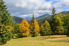 Sikt av berg och höstskogen nära Synevyr sjön Arkivfoto