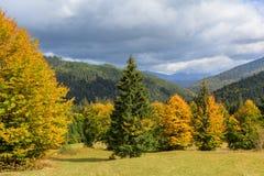 Sikt av berg och höstskogen nära Synevyr sjön Arkivbilder