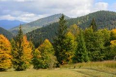 Sikt av berg och höstskogen nära Synevyr sjön Royaltyfri Foto