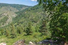 Sikt av bergen med skogen i östliga Kasakhstan Arkivbilder