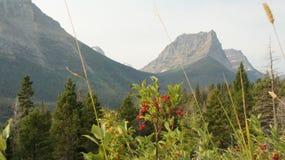 Sikt av bergmaxima i glaciärnationalpark Royaltyfri Fotografi