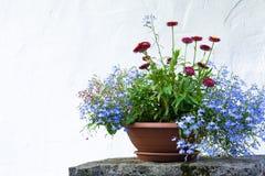Sikt av blomkrukorna med ljusa färger på en vit väggbakgrund royaltyfria bilder