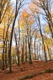 Sikt av bokträdträd i parkera Royaltyfria Foton