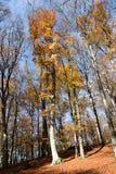 sikt av bokträdväxten i parkera Arkivfoto