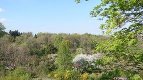 Sikt av botaniska trädgården i Kiev från över arkivbild