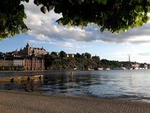 Sikt av byggnaden och floden, Stockhol, Sweeden, sommar gr?n tree royaltyfri bild