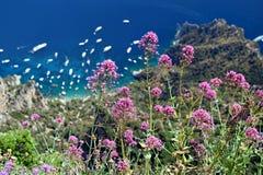 Sikt av Capri riviera med purpurfärgade lösa blommor från monteringen Solaro i Anacapri, Capri, Italien Fotografering för Bildbyråer