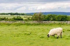 Sikt av Cotswoldsen från den Cleeve kullen nära Cheltenham Royaltyfria Bilder