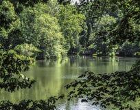 Sikt av dammet till och med trädfilialer Royaltyfria Foton