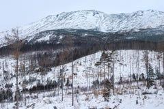 Sikt av de höga Tatras bergen i den Tatra nationalparken i Slovakien på vintern Royaltyfri Bild