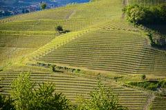 Sikt av de Langa vingårdarna Royaltyfri Foto