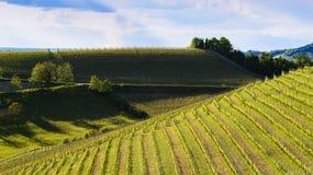 Sikt av de Langa vingårdarna Arkivbild
