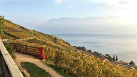 Sikt av de Lavaux terrasserna, sjön Léman och bergen i bakgrunden, Schweiz arkivfoto