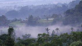 Sikt av de tropiska skogarna av Bali och starten av skymning Andreev arkivfilmer