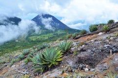 Sikt av den aktiva vulkan Yzalco, i molnen Royaltyfri Bild