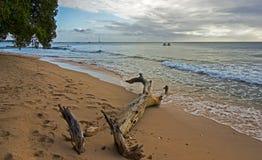 Sikt av den Barbados nordväst kusten Arkivbild
