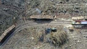 Sikt av den förstörda skogen efter en tromb, skogsavverkning arkivfilmer