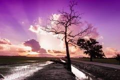 Sikt av den fantastiska purpurfärgade solnedgången Arkivbilder