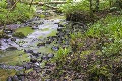 Sikt av den felika Glen Waterfalls Arkivbilder