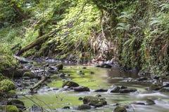 Sikt av den felika Glen Waterfalls Arkivbild