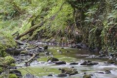 Sikt av den felika Glen Waterfalls floden Royaltyfria Foton