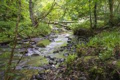 Sikt av den felika Glen Waterfalls floden Arkivfoto