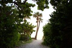 Sikt av den Florida palmträdet Arkivbilder