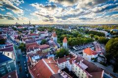 Sikt av den gamla staden från kyrkligt torn för St Olafs, i Tallinn, E Royaltyfria Bilder