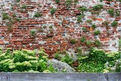 Sikt av den gamla tegelstenväggen med gröna växter och en alpin glidbana, som dekoreras med en gammal träplanka royaltyfri foto