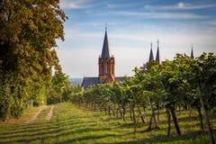 Sikt av den gotiska domkyrkakyrkan Katharinenkirche i Oppenheim till och med romantiska vingårdar royaltyfri bild