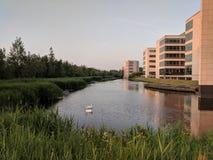 Sikt av den lugna kanalen med svanar arkivbilder