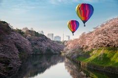 Sikt av den massiva körsbäret som blomstrar i Tokyo, Japan som bakgrund Royaltyfria Foton