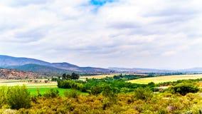 Sikt av den Olifantsrivier dalen längs huvudväg 62 mellan städerna av De Rosta och Oudtshoorn i det västra uddelandskapet Arkivfoto