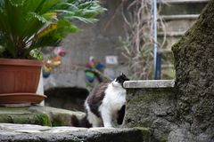 Sikt av den svartvita katten Arkivfoton