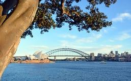 Sikt av den Sydney Opera House, bro- & Moreton fjärdfikonträdet Royaltyfri Fotografi