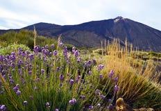 Sikt av den Teide nationalparken i Tenerife, kanariefågelöar, Spanien Arkivbilder