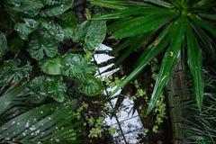 Sikt av den tropiska trädgården med exotiska växter och det stora bladet Arkivfoton