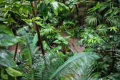 Sikt av den tropiska trädgården med exotiska växter och det stora bladet Royaltyfri Foto