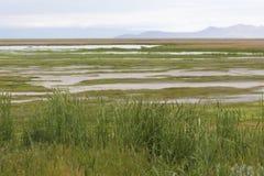 Sikt av den Utah träsk och reserven Arkivfoto
