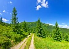 Sikt av den vintergröna barrträdskogen i sommar royaltyfri bild