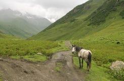 Sikt av den vita hästen Royaltyfria Bilder