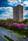 Sikt av den Washingtonian boulevarden och byggnader i Gaithersburg, M Fotografering för Bildbyråer