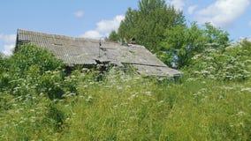 Sikt av det övergav huset med slafetaket i tjocka nad-buskar för grönt gräs arkivfilmer