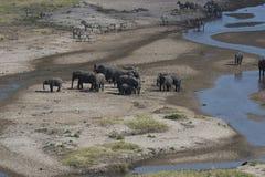 Sikt av det afrikanska landskapet med elefanter Royaltyfri Foto